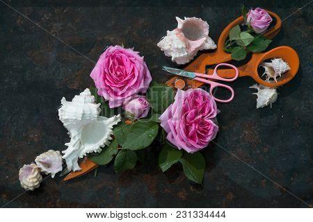 Two Pairs Of Scissors Among Pink Rose Flowers And White Sea Shells: Huge Orange Scissors Lie Diagona