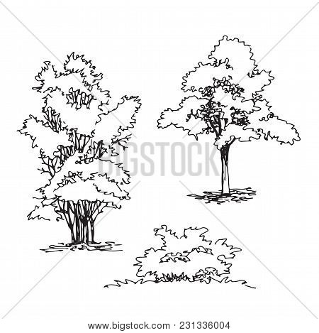 Set Of Hand Drawn Architect Tree And Bushes, Tree Silhouette, Dendrology Sketch Collection, Graphic