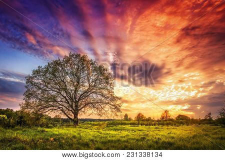 Majestic Landscape Of Bright Colorful Sunrise Over Rural Meadow With Large Tree In The Spring Mornin