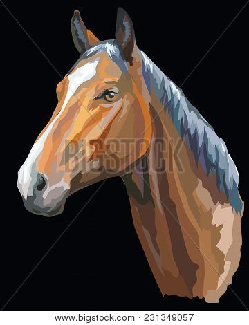 Colored Portrait Of Trakehner Horse. Horse Head  In Profile Isolated Vector Illustration On Black Ba