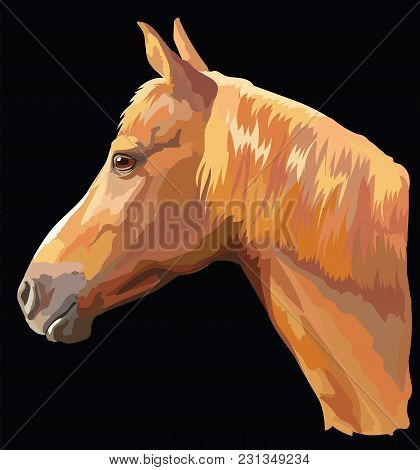 Colored Portrait Of Sorrel Horse. Horse Head With Long Mane In Profile Isolated Vector Illustration