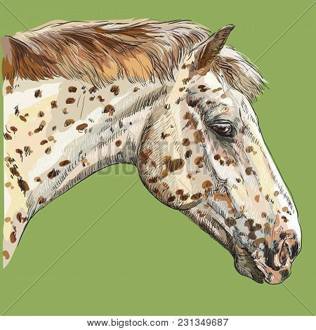 Colorful Horse Portrait-2