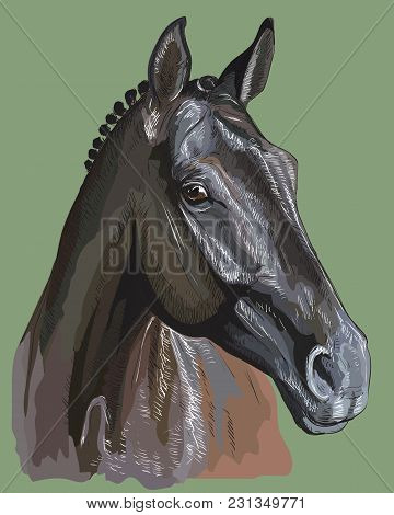 Colorful Portrait Of Trakehner Horse. Horse Head In Profile Isolated Vector Hand Drawing  Illustrati