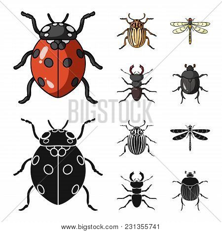 Insect, Bug, Beetle, Paw .insects Set Collection Icons In Cartoon, Black Style Vector Symbol Stock I