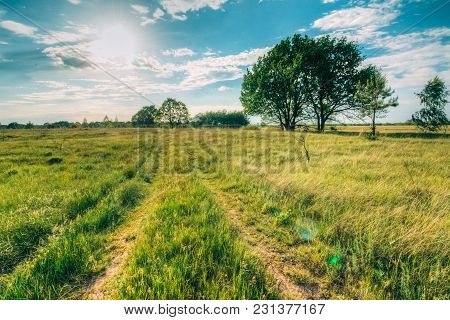 The Old Road In The Field Among The Meadow Grass Passing Near The Oaks Sunny Day With The Sun In The