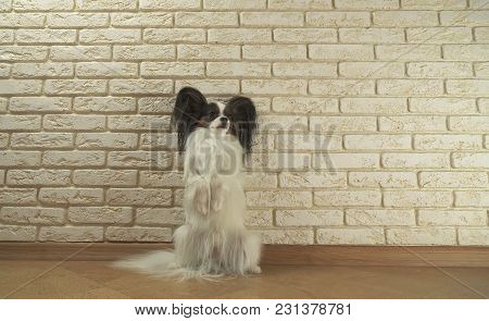 Dog Papillon Stands On Its Hind Legs Against A Decorative Brick Wall