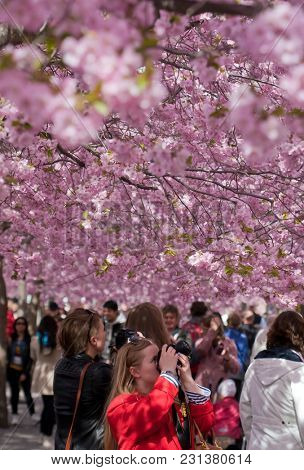 STOCKHOLM, SWEDEN - APRIL 29, 2012: People walking in a flowery park, Kungstradgarden, Stockholm, Sweden