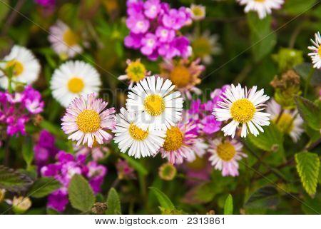 Blume Einfachheit