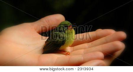 Ein Vogel in der Hand (Farbe)