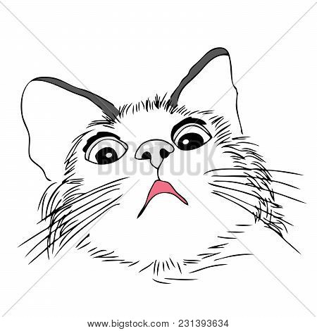 Scared And Worried Cat, Hand Draw Style. Illustration On White Background.