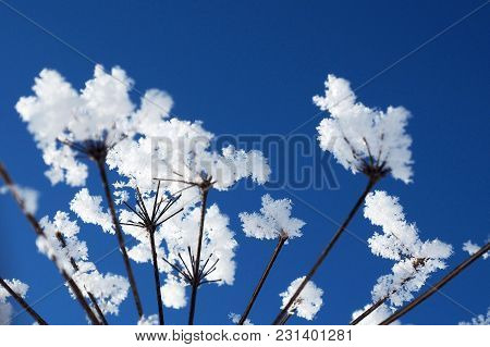Crystal Icing Grass On Blue Sky Background. Winter Wonder Of Nature Crystals Of Frost.