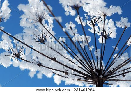 Crystal Flowers On A Background Of Blue Sky. Winter Wonder Of Nature Crystals Of Frost.