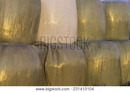 Stacked Like A Pyramid,round Bales Of Hay And Silage Wrapped In A White Membrane.food For Cows  Is S