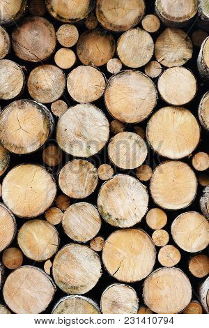 Many Wood Logs Piled Up, Natural Wooden Texture As Background