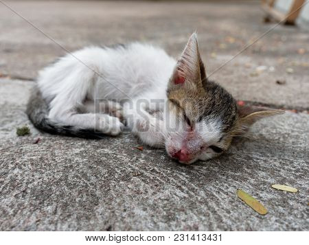 White And Brown Stray Kitten Or Cat With One Closed Eye And Scar On Nose Over Cement Background Whic