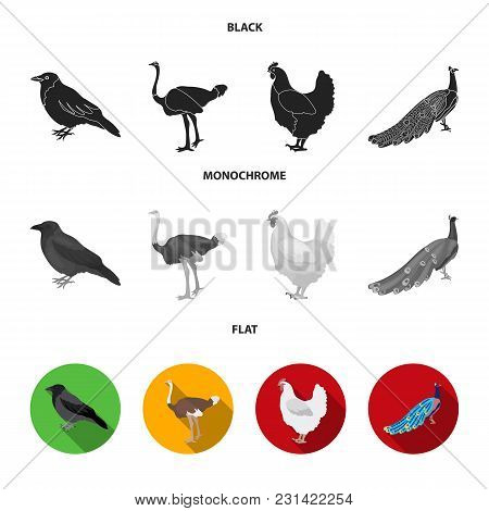 Crow, Ostrich, Chicken, Peacock. Birds Set Collection Icons In Black, Flat, Monochrome Style Vector