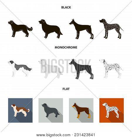St. Bernard, Retriever.doberman, Labrador. Dog Breeds Set Collection Icons In Black, Flat, Monochrom