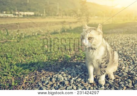 cat sit on the grassland in the outdoor