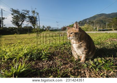 old cat in the grassland