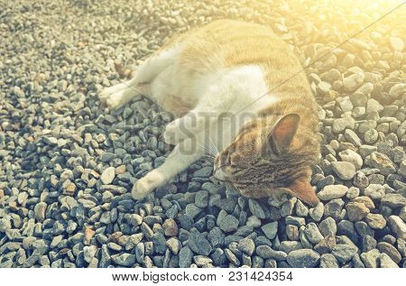 fat tabby cat sleep on ground with funny pose