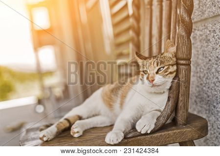 young cat sleep on a chair in the outside
