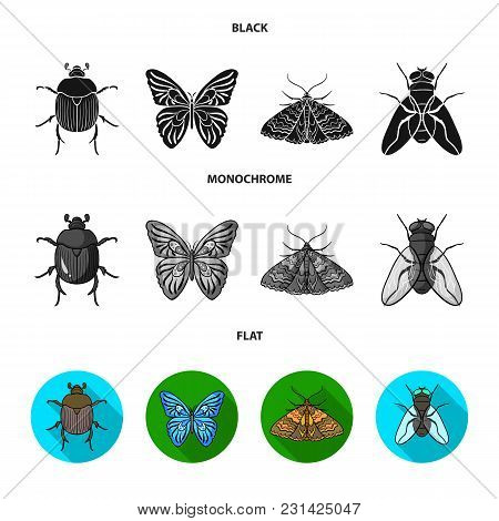 Wrecker, Parasite, Nature, Butterfly .insects Set Collection Icons In Black, Flat, Monochrome Style
