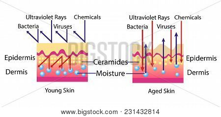 Effect Of Environment On The Skin, Vector Diagram For Cosmetological Illustration Isolated