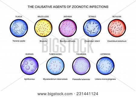 Vector Illustration Of The Causative Agents Of Zoonotic Infections