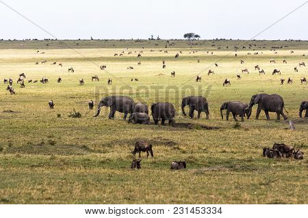 Savannah with large and small herbivores. Elephant family in the savannah. Masai Mara, Kenya