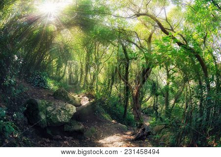 Magic Forest. Green Summer Woodland At Sunny Day