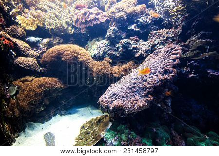 Underwater Scene. Coral And Fish Under Water