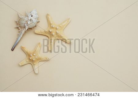 Shell And Starsfish Over Ivory Neutral Background. Copy Space For Text. Isolated.