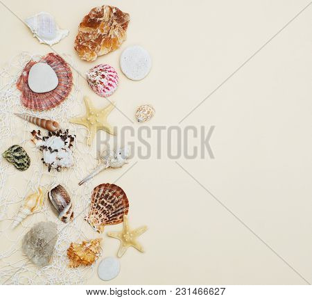 Sea Shells Frame On Neutral Ivory Backgroundwith Copy Space For Text. Nautical Concept. Square Image