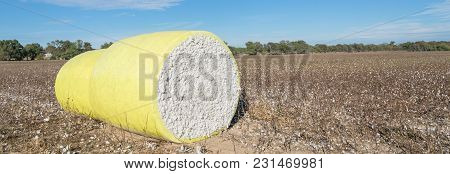 Close-up Cotton Bales On Harvested Field In Texas, Usa