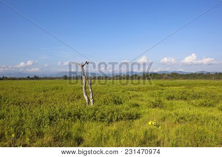 Dead Tree With Exotic Vegetation Near Woodland And Mountains In Wasgamuwa National Park Under A Blue