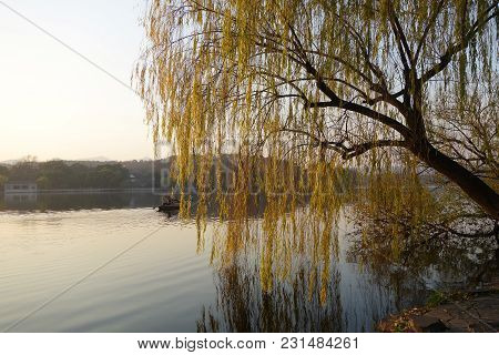 Hangzhou, China-jan 08, 2018: Branches Of Weeping Willow Growing On The Coast Of West Lake. Popular