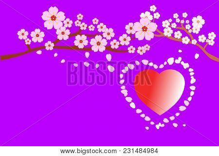 Full Bloom Cherry Blossoms And Petals Blowing/flying Around Red Heart Shape, Purple Background. Beau