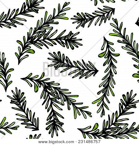 Seamless Endless Pattern Of Rosemary Branch. Background With Aromatic Healing Herb. Fresh Cooking Bb