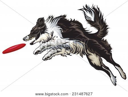 Vector Colorful Illustration With Dog (border Collie) Isolated On White Background. Fluffy Black And