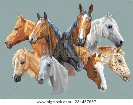 Set Of Colorful Vector Portraits Of Horses Breeds (trakehner Horse, Welsh Pony, Orlov Trotter, Arabi