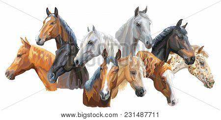 Set Of Colorful Vector Portraits Of Horses Breeds (trakehner Horse, Welsh Pony, Orlov Trotter, Arabi