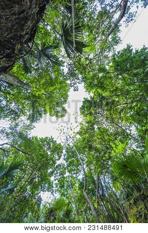Vew Of The Sky Through Green Trees. Xcaret, Mexico