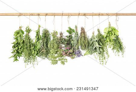 Fresh Herbs Isolated On White Background. Thyme, Basil, Rosemary, Sage, Mint, Oregano, Marjoram, Sav