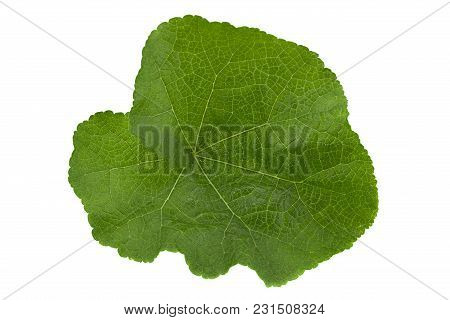 Stem-rose Flower Leaf Closeup Isolated On White