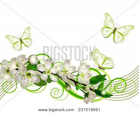 Blossoming Cherry Branch With White Flowers And Leaves On White Background. Cherry Blossom Spring De
