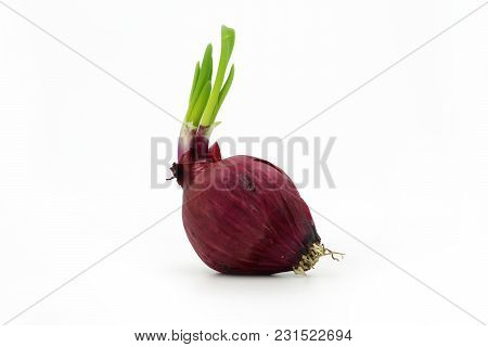 Single Red Onion Isolated On White Background.