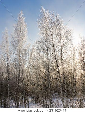 The Sun Illuminates The Hoarfrost On The Trees. Winter Nature Under Snow On A Sunny Day.