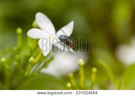 Close Up Of Insect Fly On The Flower