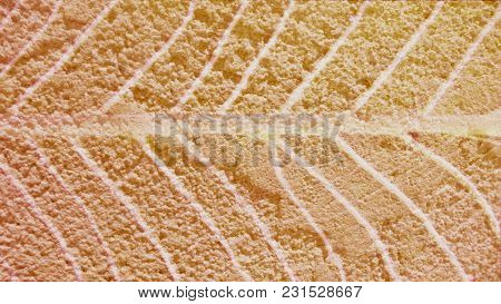 Abstract Color Cement Wall Overlay With Leaf Texture Background