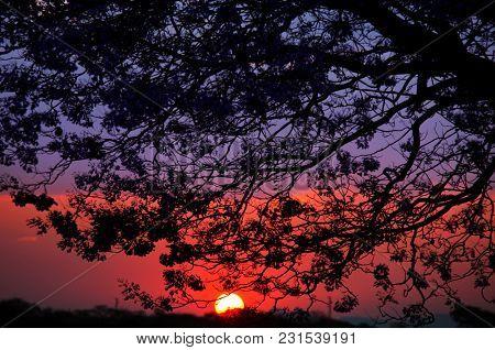 Sunset scene in Africa